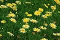 Botanic garden (7462487330).jpg