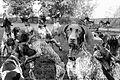 Brat CGC therapy dog Thomas Bull Memorial Park composite.jpg