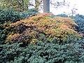 Bremen Rhodopark November 4.jpg