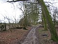Bridleway - View South - geograph.org.uk - 143299.jpg