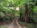 Bridleway from Marian Mill to Trelawnyd - geograph.org.uk - 542939.jpg
