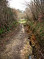 Brier Lane - geograph.org.uk - 708954.jpg