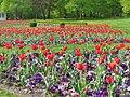 Britzer Garten - Tulipan 2013 - geo.hlipp.de - 36180.jpg