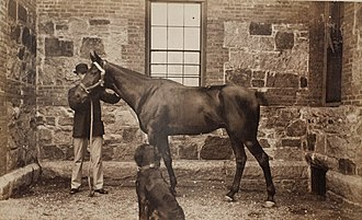 Brooks Adams - Image: Brooks Adams with horse and dog, photograph by Marian Hooper Adams, ca. 1883
