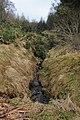 Broomhill Burn - Muir of Thorn - geograph.org.uk - 719722.jpg