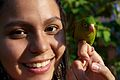 Brotogeris jugularis -Panama -pet perching on finger-8a.jpg