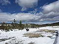Buffalo at Biscuit Basin in Yellowstone National Park.jpg