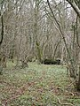 Bull Pit Coppice - geograph.org.uk - 301259.jpg