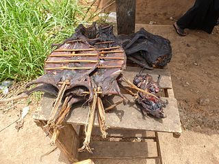 Bushmeat Meat hunted in tropical forests