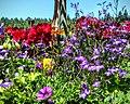 Butchart Gardens - Victoria, British Columbia, Canada (28637151114).jpg