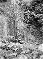 COLLECTIE TROPENMUSEUM Bossen van Tekelan op de Merbaboe M. Java TMnr 10013178.jpg