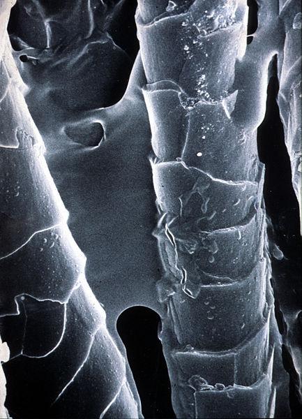 File:CSIRO ScienceImage 2721 Electron Microscopy Image of Polymer Bonded Fibres.jpg