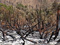 Cachagua Tassajara Fire 05.JPG