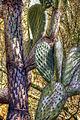 Cactus (8312169341).jpg