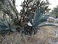 Cactus 22.jpg