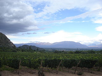 Argentine wine - A vineyard in the Cafayate region of Calchaquí Valleys, Salta, utilizing modern vine training and drip irrigation techniques.
