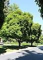 California State Capitol Park 12.jpg