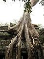 Cambodia 08 - 078 - Ta Prohm (3227688939).jpg