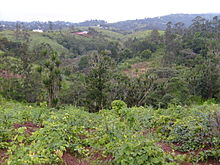 Description de l'image Cameroon - forests.jpg.
