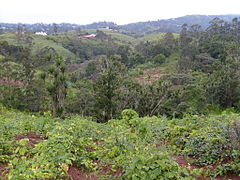 Cameroon - forests.jpg