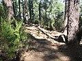 Camino en Pinar del Roque Chimaque - panoramio.jpg