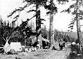 Camping in West Seattle, ca 1905 (SEATTLE 1376).jpg
