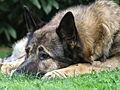 Can Dog Galicia.jpg