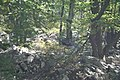 Can you see the turkey - panoramio.jpg