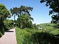 Castle Road - geograph.org.uk - 819507.jpg