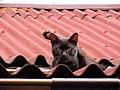 Cat40 (17210955682).jpg