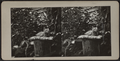 Cat atop pillow on a tree stump, from Robert N. Dennis collection of stereoscopic views.png