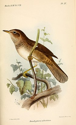 Catalogue of the Birds in the British Museum (1883 - 1883) (20552037126).jpg