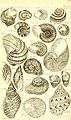 Catalogue systématique et raisonné, ou, Description du magnifique cabinet appartenant ci-devant à M. le c. de *** - ouvrage intéressant pour les naturalistes, and pour les amateurs de l'histoire (14578287488).jpg