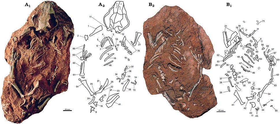 Catopsbaatar catopsaloides