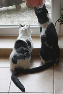 Cats watching prey.jpg