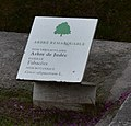 Cercis siliquastrum L. in Paris Jardin des Tuileries, tree marker.jpg