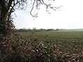 Cereal crop in winter sunshine - geograph.org.uk - 1140975.jpg