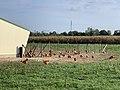 Chemin du Bois Vert (Tramoyes), élevage de poulets.jpg