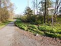 Chenstochov ------- Jewish Cemetery of Czestochowa ------- 4.JPG