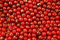 Cherry texture.jpg