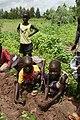 Children planting Acacia nilotica - Kerr Ngoryan - December 2009 (4267348010).jpg