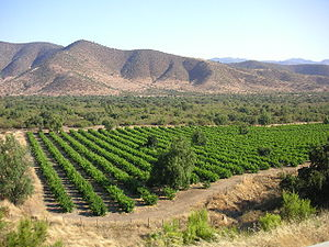 Central Chile - Many of Chile's vineyards are found on flat land within the foothills of the Andes.
