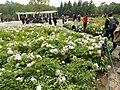 China National Flower Garden - panoramio.jpg