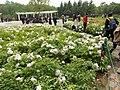 China National Flower Garden - panoramio.jpg