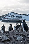 Chinstrap Penguins Half Moon Island Antarctica 7 (40371517523).jpg