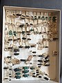 Chrysomelidae collection, Natural History Museum, London 25.jpg