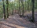 Chuchelský háj, lesní cesta (02).jpg