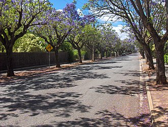 Clarence Park, South Australia - Churchill Avenue, looking south towards Cross Road