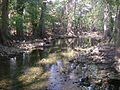 Cibolo Creek, Boerne Texas 10-08.jpg