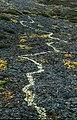 Cladonia rangiferina 01(js), Traill Island (Greenland).jpg